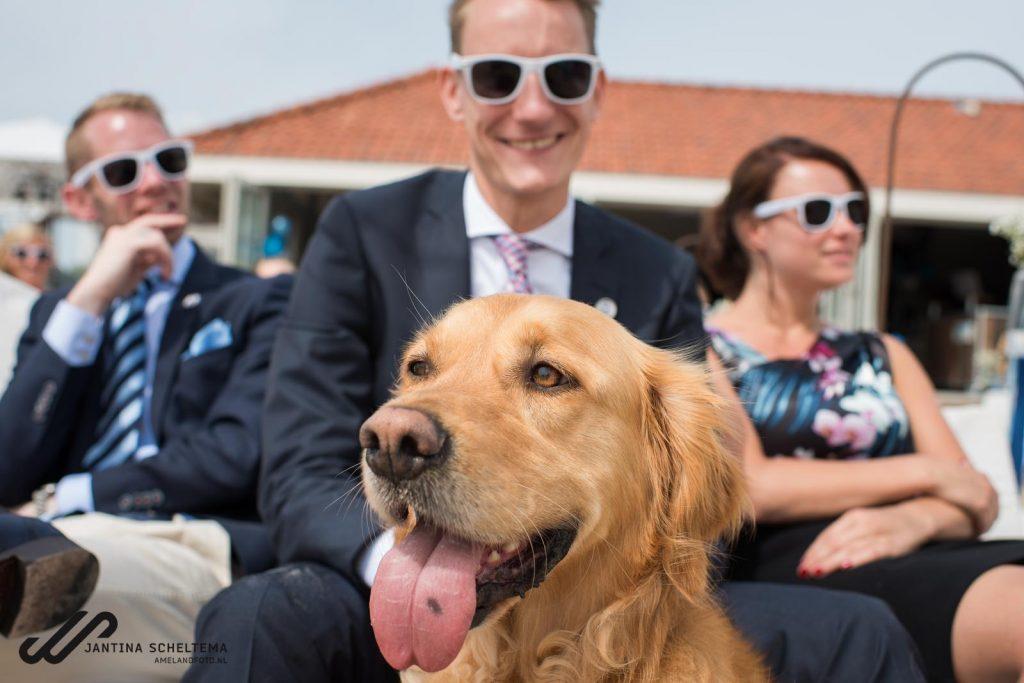 Je hond mee op je bruiloft